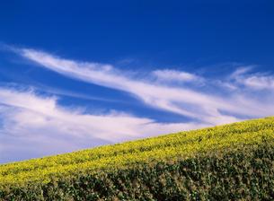 北海道の丘と青空の写真素材 [FYI00103283]