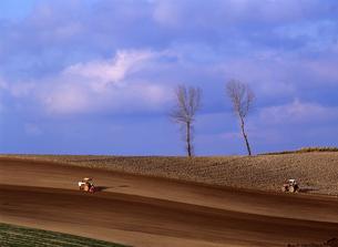 春の丘とパフィーの木の写真素材 [FYI00103286]