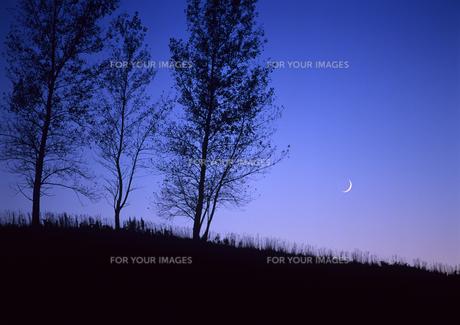 三日月丘のと並木の写真素材 [FYI00103289]