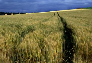 麦畑と一条の光の素材 [FYI00103314]