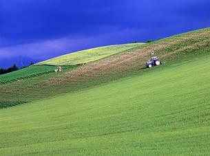 雨上がりの丘の写真素材 [FYI00103315]