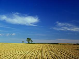 北海道の耕地と雲の写真素材 [FYI00103321]