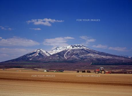 春の耕地と富良野岳の写真素材 [FYI00103323]