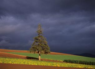 秋のクリスマスツリーの木の素材 [FYI00103332]