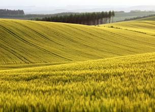 麦の丘の素材 [FYI00103334]