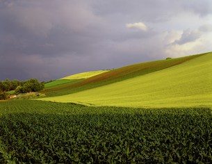 雨上がりの麦畑の写真素材 [FYI00103345]