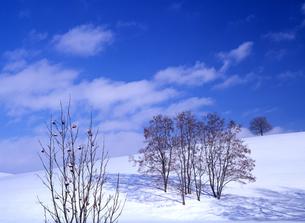 冬の丘と青空の素材 [FYI00103350]