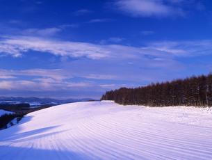 雪原と松林の素材 [FYI00103351]