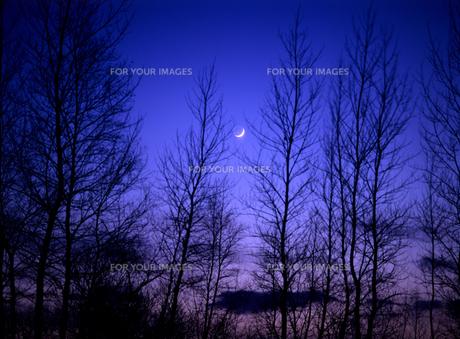 森林と冬の月の写真素材 [FYI00103366]