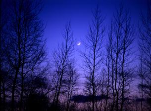 森林と冬の月の素材 [FYI00103366]