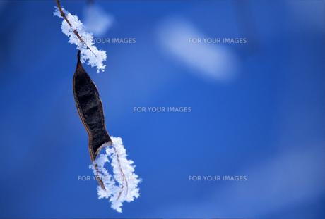 霧氷と鞘の素材 [FYI00103374]