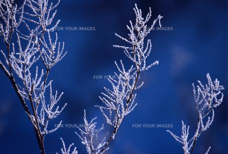 霧氷と枝の素材 [FYI00103382]