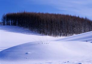 冬の丘の素材 [FYI00103384]