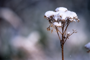 冬の綿帽子の素材 [FYI00103386]