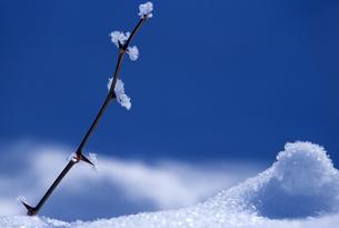 霧氷と雪原の写真素材 [FYI00103396]