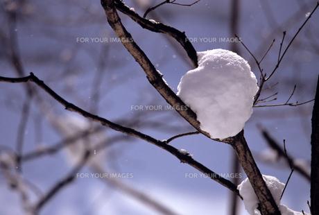 森の雪の素材 [FYI00103402]