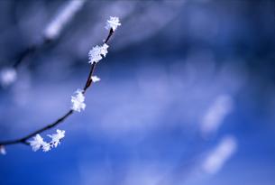 霧氷のついた枝の素材 [FYI00103410]