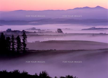 丘と霧の素材 [FYI00103420]