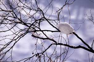 冬の木立の素材 [FYI00103433]