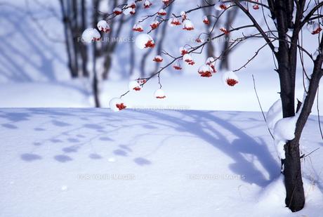 雪原とナナカマドの素材 [FYI00103437]