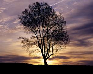 黎明の哲学の木の素材 [FYI00103447]