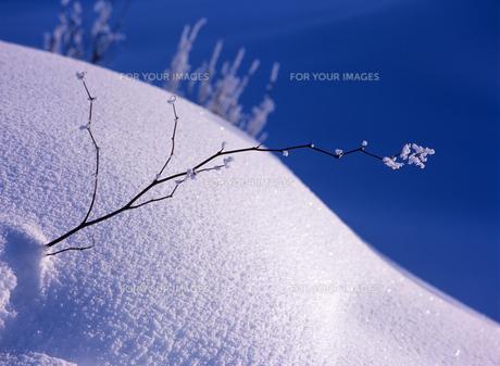 霧氷と丸い丘の素材 [FYI00103453]