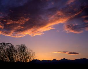 並木と朝雲の素材 [FYI00103457]