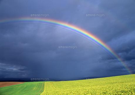 虹と丘の素材 [FYI00103463]