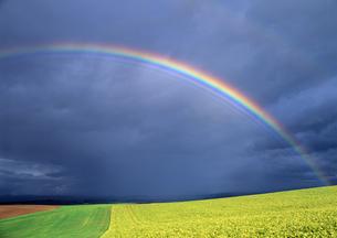 虹と丘の写真素材 [FYI00103463]