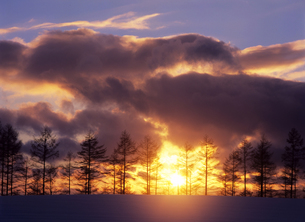 雪原の並木と夕陽の素材 [FYI00103466]