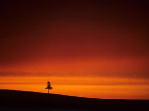 木立とオレンジの空の素材 [FYI00103469]
