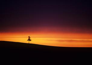 夕暮れの木立の素材 [FYI00103471]