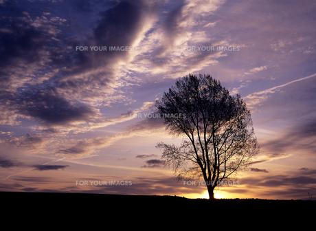 朝雲と哲学の木の素材 [FYI00103473]