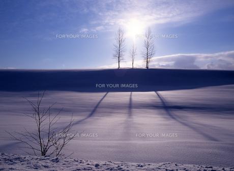 冬の木立と影の素材 [FYI00103483]
