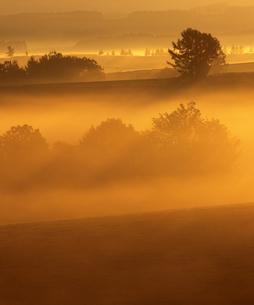 霧の丘と木立の素材 [FYI00103490]