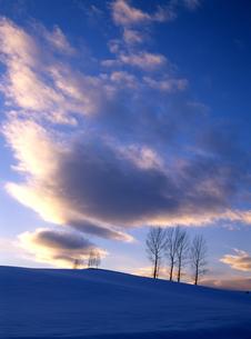 冬の夕暮れと木立の素材 [FYI00103495]