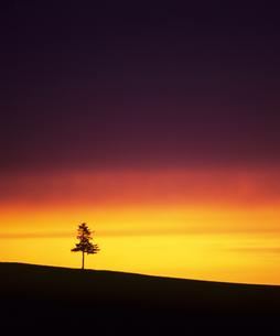 黄昏の木と空の素材 [FYI00103503]