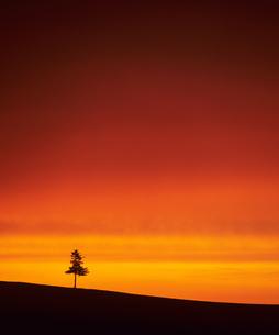 オレンジの空と木の素材 [FYI00103504]