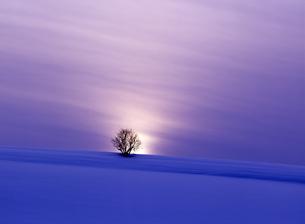 夕暮れの冬の大地の素材 [FYI00103505]