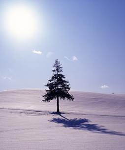 クリスマスツリーの木と太陽の素材 [FYI00103507]