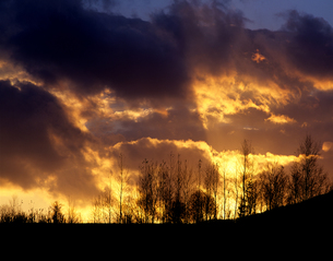 鮮烈な夕陽と木立の素材 [FYI00103511]