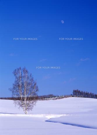雪原と冬の月の素材 [FYI00103517]
