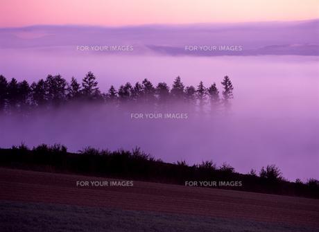 ピンク色の朝霧の写真素材 [FYI00103534]
