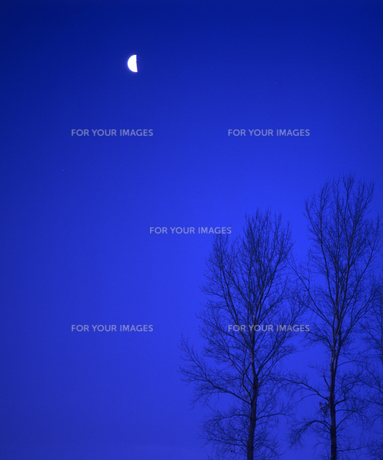 木と半月の素材 [FYI00103535]