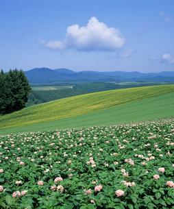初夏の北海道の写真素材 [FYI00103541]
