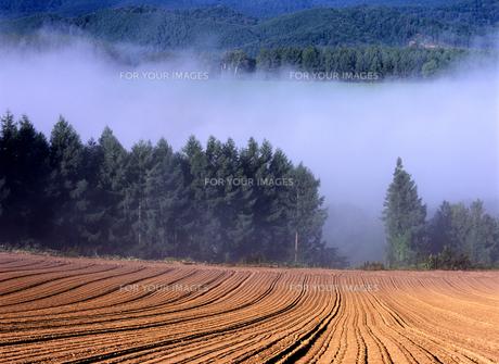 朝霧の耕地の写真素材 [FYI00103543]