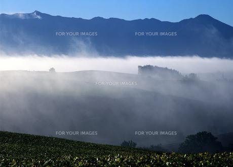 流れる朝霧の写真素材 [FYI00103550]