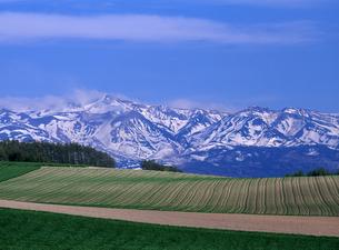 丘と残雪の山の素材 [FYI00103554]
