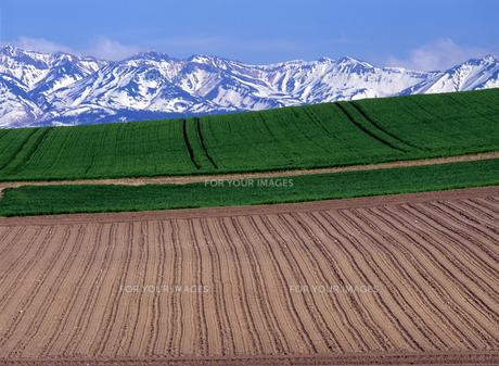 残雪と丘模様の素材 [FYI00103557]