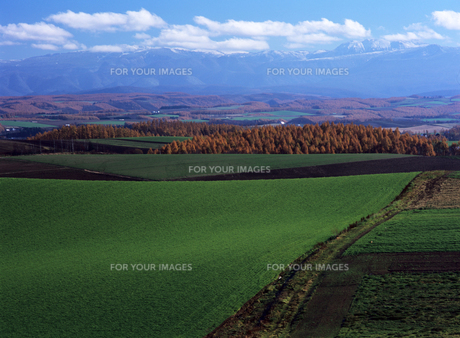 緑の丘の素材 [FYI00103558]